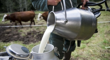 A guide to cheese Raw milk: guarantees quality cheese